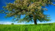 CRANE UP: Apple Tree Blossom video