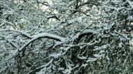 Apple tree under the snow video