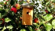 apple tree with bird house video