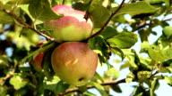 Apple. video