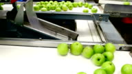 Apples in a Packing Plant video