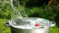 Apples in water. Apples are washed in a basin of water video
