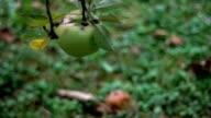 Apples video