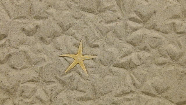 Approximation of starfish lying on the sand and her imprints video