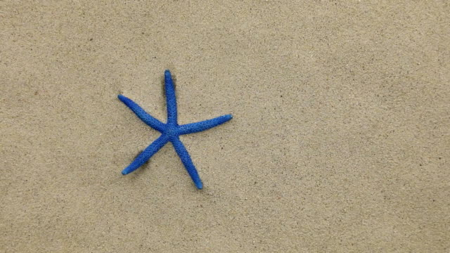 Approximation of starfish lying on the sand, zoom video