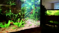 Aquarian fish video