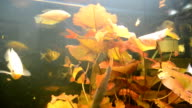 Aquarian fishes video