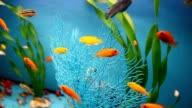 aquarium background calm blue fish swim grass video saver video