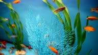 aquarium background calm fish blue swim grass video saver video