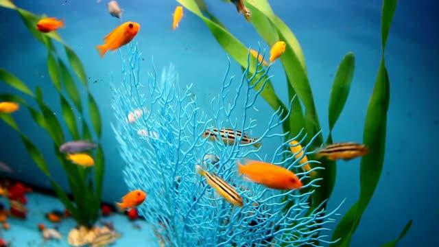 aquarium background calm fish swim blue grass video saver video