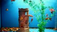 aquarium background fish blue calm swim grass saver video video