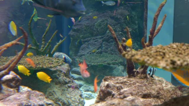 4K Aquarium Background Video. video