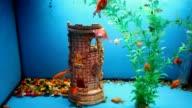 aquarium blue background calm fish swim grass video saver underwater video