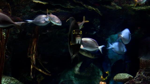 aquarium fish HD video