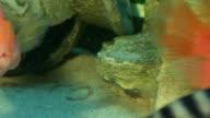 aquarium fish video