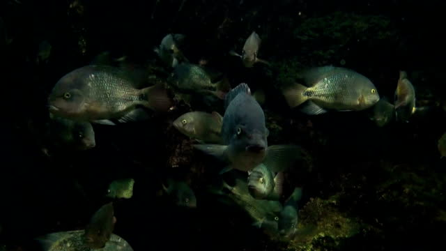 HD: Aquarium Fish video