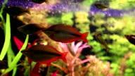 Aquarium fishes video
