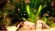 Aquarium full of colorfull fish video