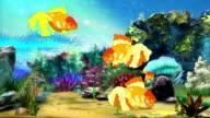 Aquarium Goldfish video