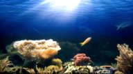 Aquarium PAL video