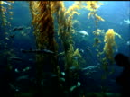 Aquarium Scene with Silhouetted People 3 video