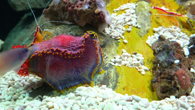 Aquarium, Sea anemone video