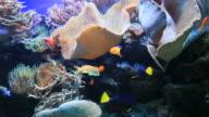 aquarium video