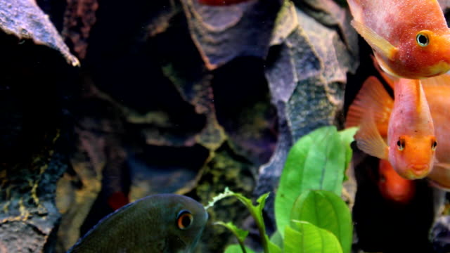 Aquarium (HD) video