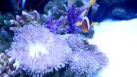 Aquarium. video