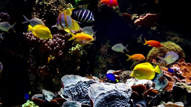 Aquarium with saltwater fish video