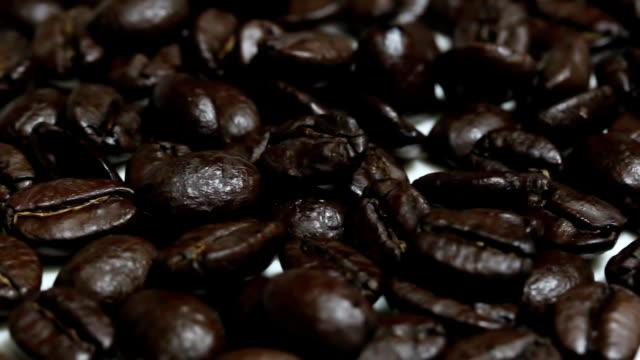 arabica coffee bean video