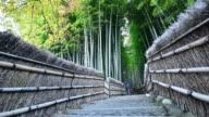 Arashiyama Bamboo forest in Kyoto, Japan video
