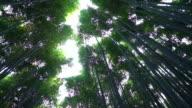 Arashiyama video