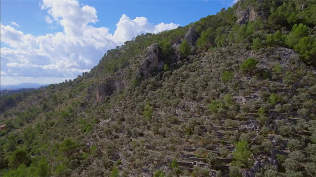 Arial View of mountain range and mountain slope with olive trees (terraced field) on Sierra de Tramuntana / Majorca - Spain video