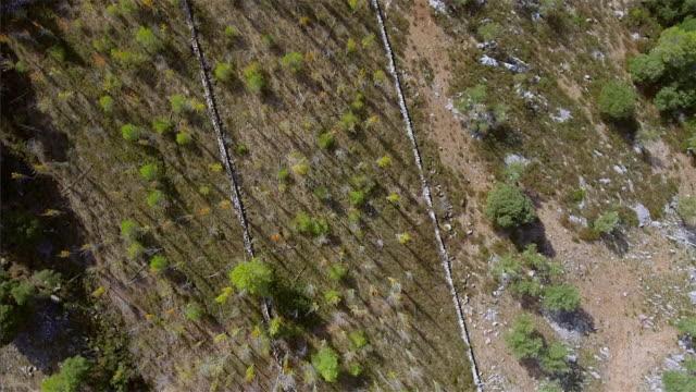 Arial View of tree area on Sierra de Tramuntana / Majorca - Spain video