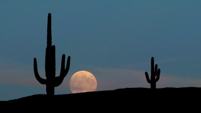 Arizona Saguaro moonrise video