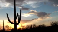 Arizona Saguaro Sunset Time Lapse video