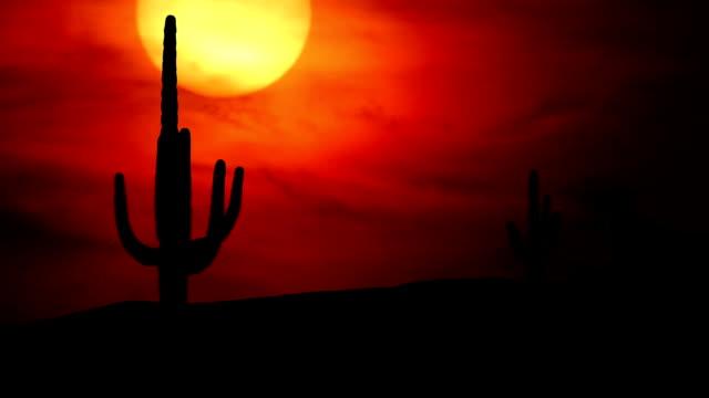 Arizona Saguaro sunset video