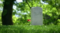 Arlington National Cemetery in Spring Single Grave with Flower video