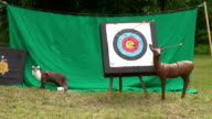 Arrows hitting targets video