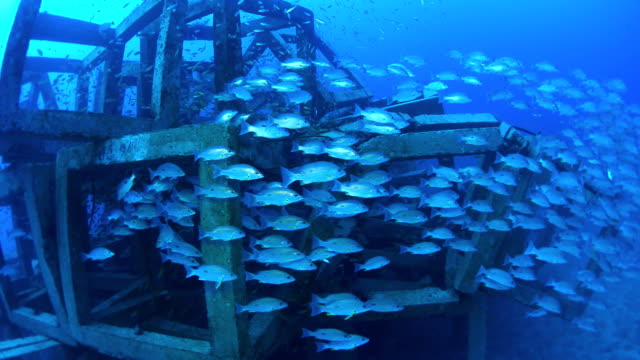artificial reef, Thailand video