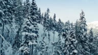 Ascending Snowy Mountain Side With Trees video