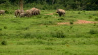 Asia wild elephent at Kui Buri video