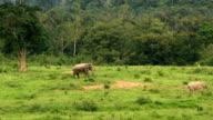 Asia wild elephent at Kui Buri video
