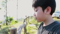 Asian boy crying in garden video