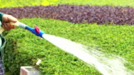 Asian Gardener watering the lawn in park video