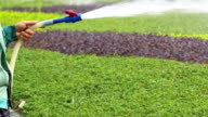 Asian Gardener watering the lawn in park,slow motion. video