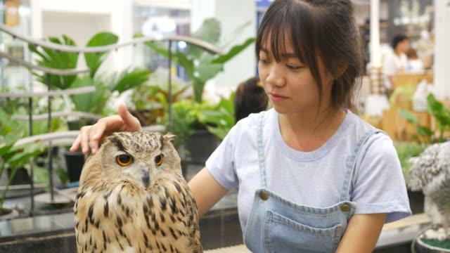 Asian girl play with big owl video