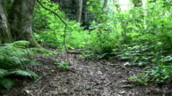 Asian Girl Walking Through The Woods video