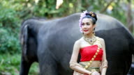 Asian woman with elephant in creek ,Chiang mai. video